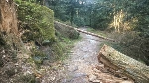 Bad Wildbad, Trail, Schwarzwald, Sommerberg, Zick-Zack-Weg