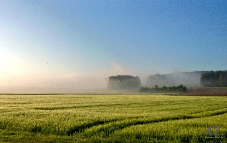 Feld, Wald, Nebel, Himmel, Destuben