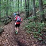 Anstieg, Climb, Wald, Forrest, Singletrail