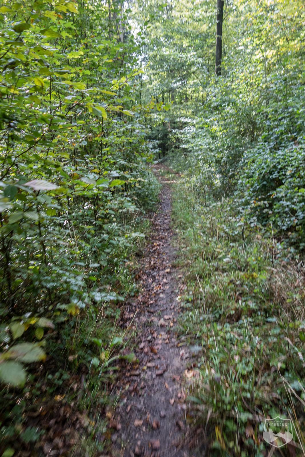 Maintal-Trail, Maintaltrail