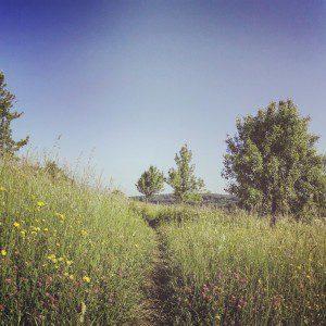 IMG_2840_Snapseed